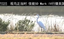 观鸟正当时 佳能5D Mark IV行摄美国德州