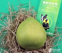motorola手机开发布会 邀请函竟是个柚子?