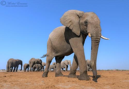 非洲大草原的魅力 精彩的野生动物摄影-中关村在线