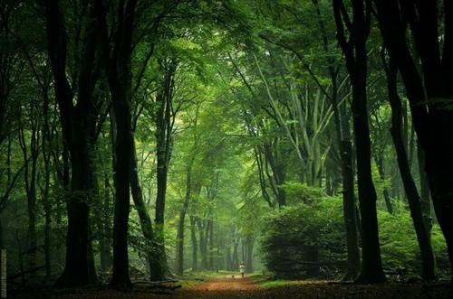 绝美童话森林 摄影师镜头下的迷幻世界 原创图片