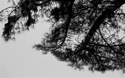 的作品,无论是简单的黑白对比还是常见的一朵花一棵树,