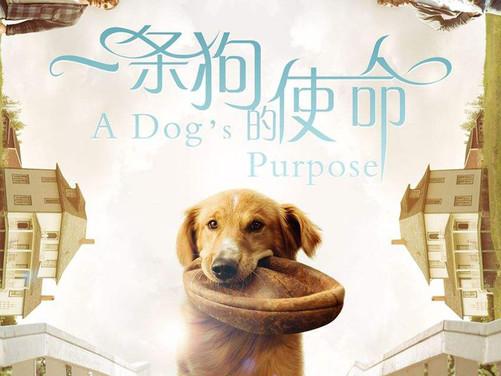 一条狗的使命将上映 原创