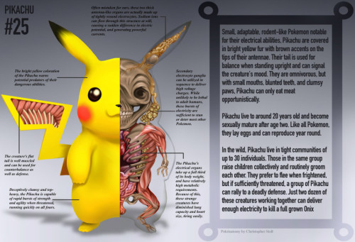 皮卡丘的骨骼结构我想起了兔子