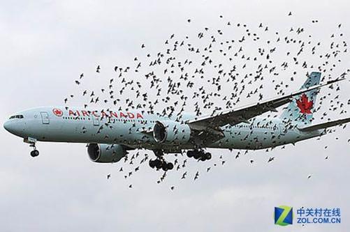 首先飞鸟如果撞击飞机