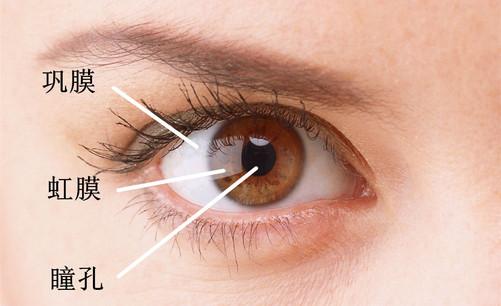 人的眼睛结构由巩膜,虹膜,瞳孔,晶状体,视网膜等部分组成.