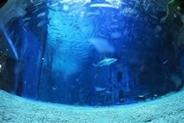 蔚蓝世界 佳能mini X海洋馆试拍体验