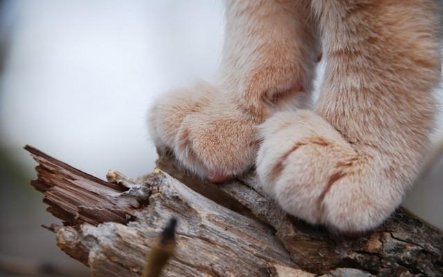 动物的爪子 图片