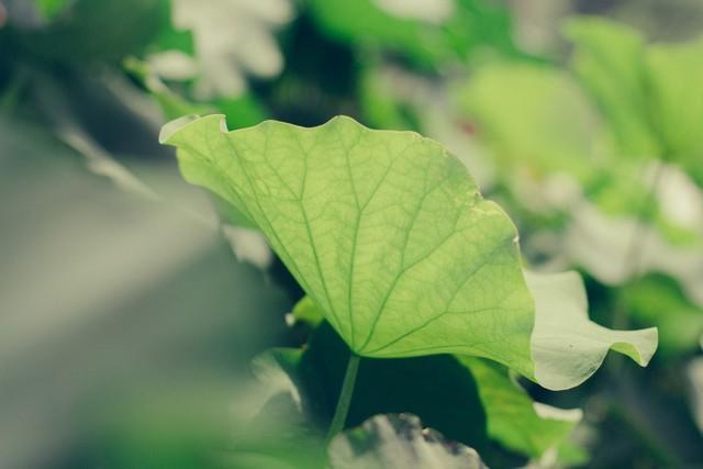 背景 壁纸 绿色 绿叶 树叶 植物 桌面 640_427