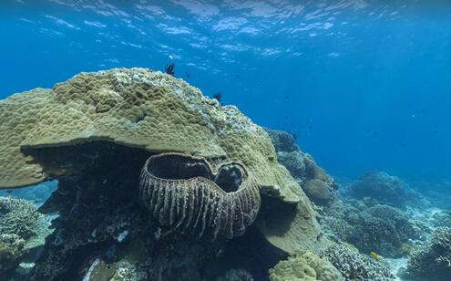 凉爽一下:谷歌街景带你畅游海底世界