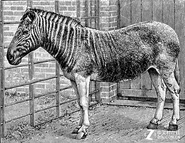 英国博物馆3D打印斑驴骨骼令其恢复原貌