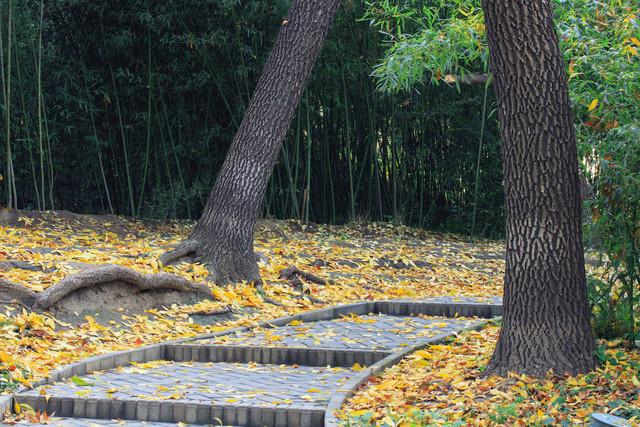 秋天布满落叶的小路