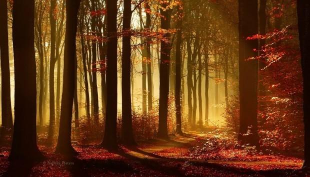 绝美童话森林 摄影师镜头下的迷幻世界