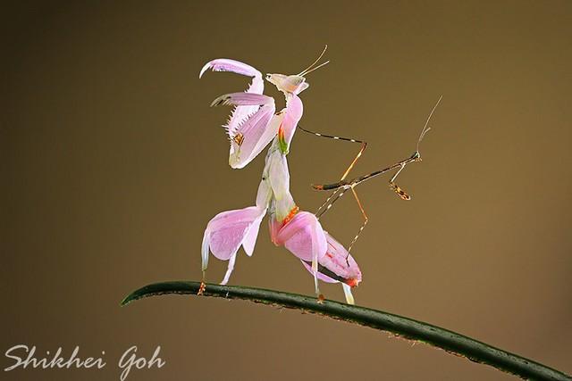 纤毫毕现 优秀的昆虫微距摄影作品欣赏图片