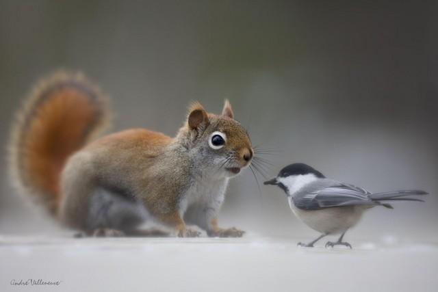 镜头下的松鼠展现了它最自然的一面