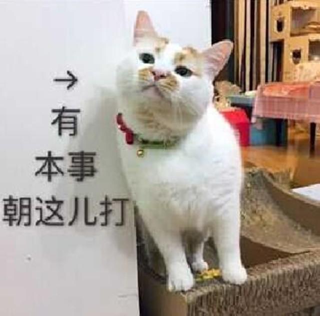 阿里猫图片大全可爱