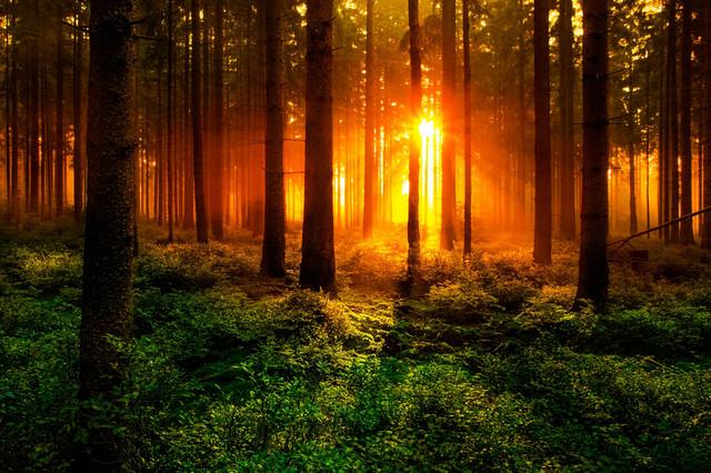 每月新玩法No.4 小花园拍出大森林的感觉