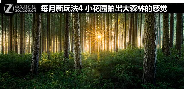 每月新玩法四 小花园拍出大森林的感觉