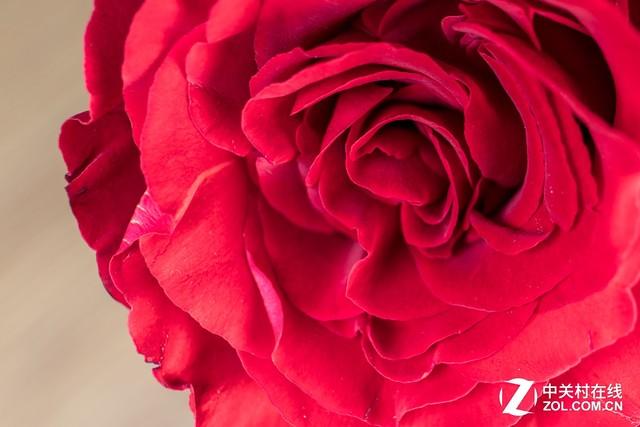 又到一年踏青时 怎么拍出逼格满满的花
