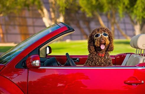 百事泰车载吸尘器 让狗狗与爱车和平相处