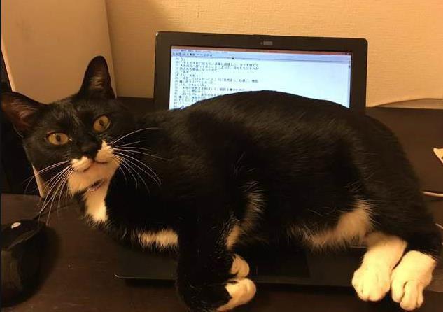并不是取暖?为什么猫爱趴笔记本电脑上