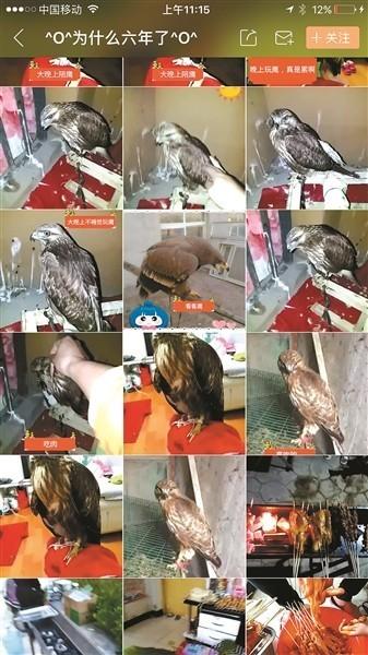 直播平台视频卖鹰:这可真是作大死!