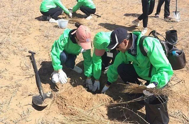 在内蒙古阿拉善地区开展着防沙漠化植树工作.