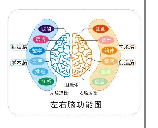 左右脑功能图(图片引自百度百科)-如果你也记忆力早衰 我劝你不要