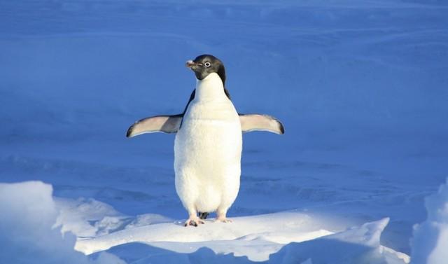 你以为的Linux:官方发名单却被打脸