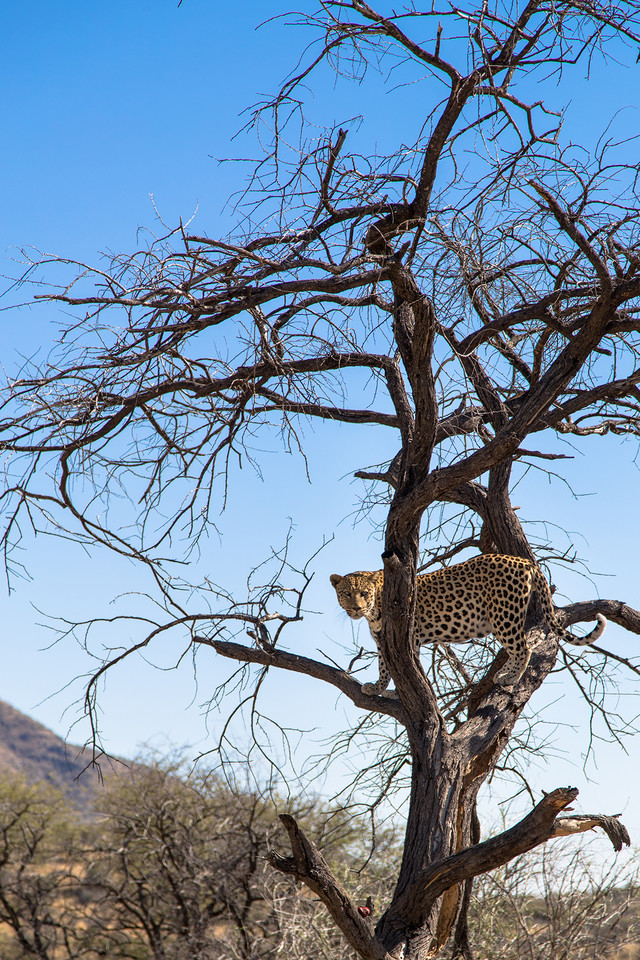 EOS非洲之旅第一集:抓拍奔跑中的猎豹