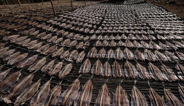 迪拜海鲜市场成群的鲨鱼和鱼翅