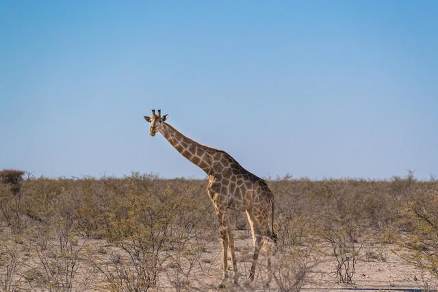 EOS非洲之旅第二集:草原上的野生动物