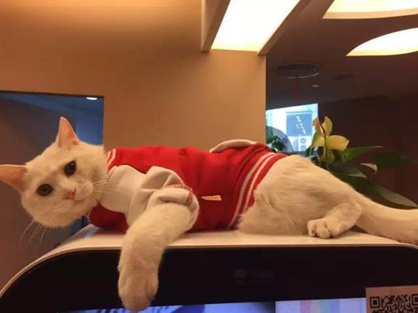 2年前一只饿猫走进腾讯 成为4万员工之一