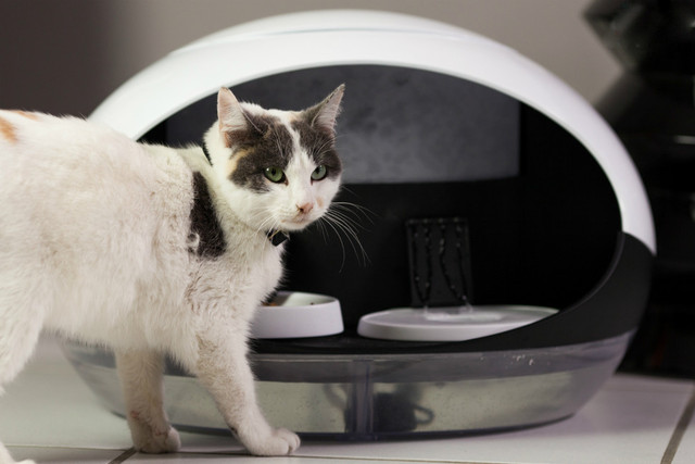 铲屎官福音 catspad智能宠物食物分发器