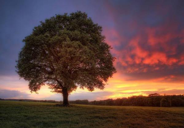 微信头像风景大树