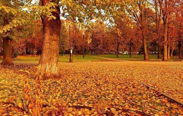 秋天突然地袭来 金秋季节该如何养生?   虽说时下家装是好时机,但秋季装修的人多,工程队与工人往往为了赶活儿抢工程而忽视质量。还有,秋冬季是中国传统节日集中的季节,家装施工工人大多会回家过节,因此这个时候他们干活都比较快,所以与其他季节相比,秋季工人磨洋工、拖工期的现象比较少见,但这样一来,干活难免毛糙,因此提醒业主验收工程时一定要仔细,严格把关。说完家装,这家电选购也同样不能马虎。今回,鄙人就为大家推荐几款金秋必备的家电产品。 TESCOM NTCD40 电吹风机   并非所有女生都是天生丽质,但大多