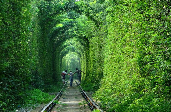 中国竟上榜了 世界上最美的10条树隧道