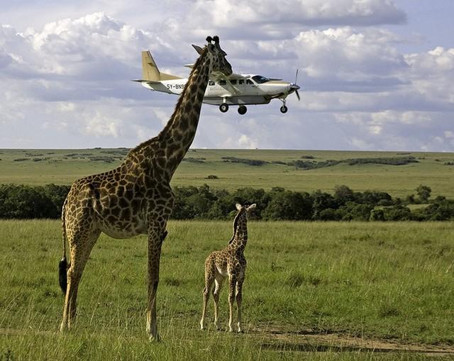 最贵价值206万 10张最牛的飞机抓拍照