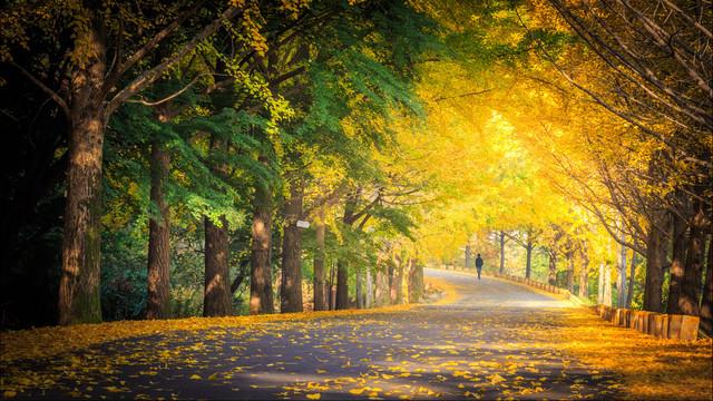 每月新玩法6 秋日里最美的银杏与红叶