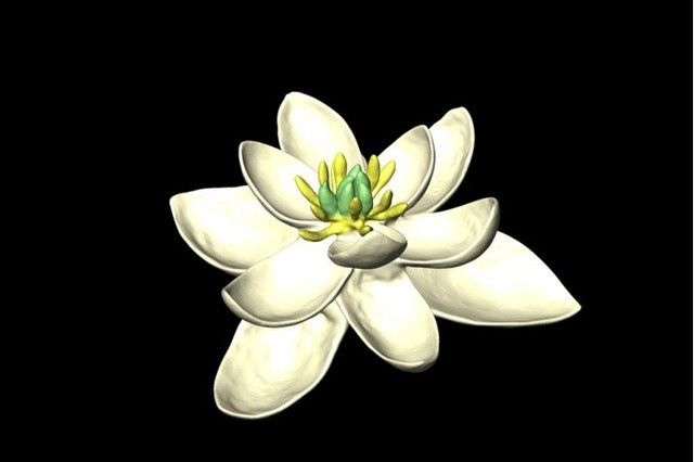 借助植物数据库模拟技术复活最古老的花