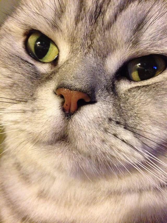 微信党必学技能 如何用手机拍好宠物照