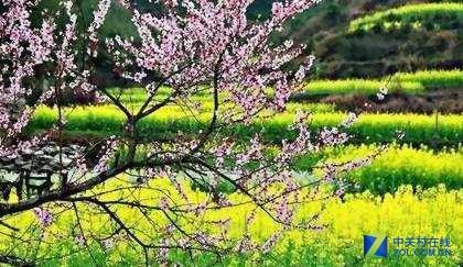 带上VeePai Z2相机 拍下最美人间四月天