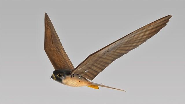 加拿大机场使用Robird无人机驱赶飞鸟