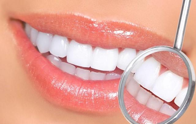 牙齿名称结构图28颗牙