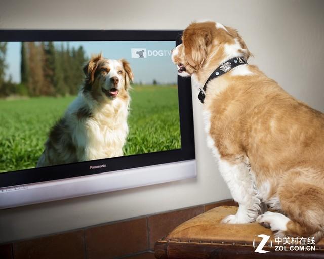 宠物狗也看电视 全球十国开通DOG TV