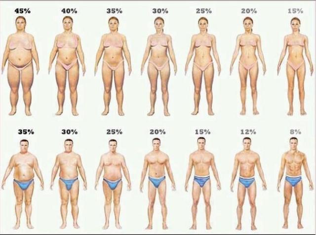 你真胖么 体脂率是什么 体脂率的计算方法