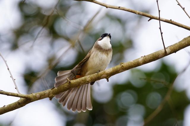野生动物摄影师的福音 索尼微单™A7RII