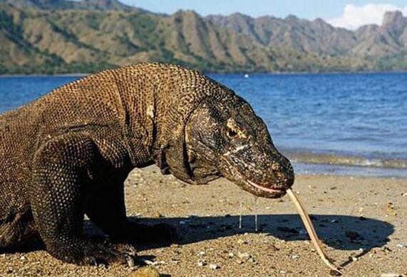 250年您满意吗 地球上最长寿的五种动物