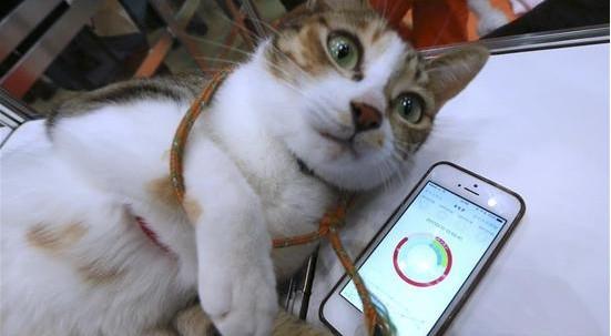 宠物可穿戴设备 可感知它们的情绪