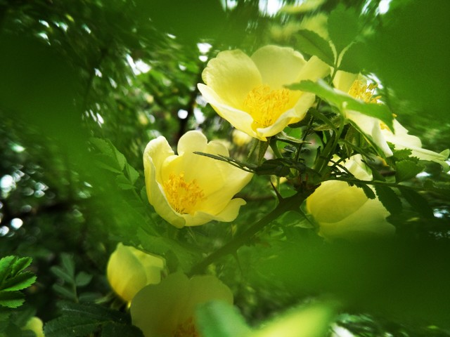 OPPO R9s清新绿:春天可以如此拍花草