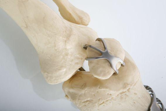 动物体头部骨骼图
